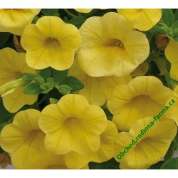 Million Bells Calita Deep Yellow