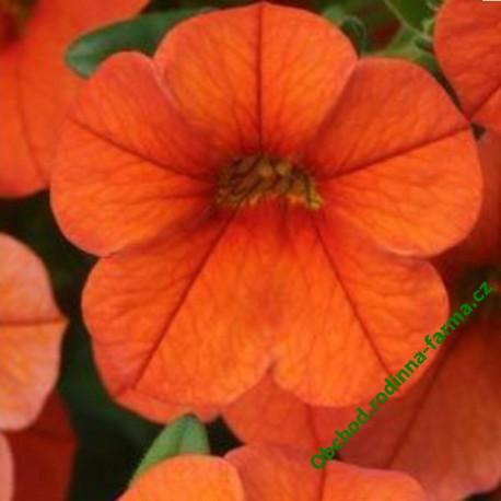 Milion Bells Calita Orange