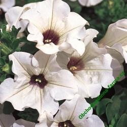 Surfinie White